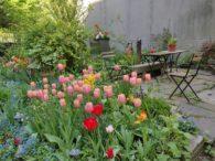 Tulips blooming in Parque de tranquilidad garden